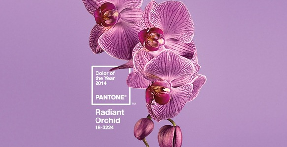 radiant_orchid